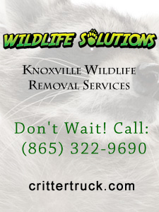 Wildlife Solutions